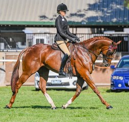 Future Farms ever busy and gun jockey Jessica Dertell stepped her newest edition and lovely thoroughbred North East Duke out today in the Racing Victoria classes.