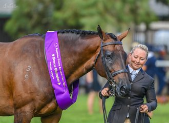 Brooke Sweeney had plenty to smile about when her terrific day began with the reserve champion led hunter hack