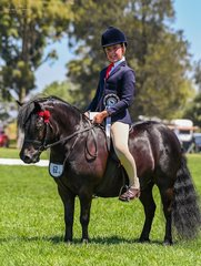 Champion ridden shetland was the lovely Donavavon James the first ridden beautifully by Lillie Foord.