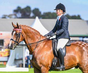Donna White waited for her turn in the champion hack line up after winning her height class with the lovely Archill Bolero