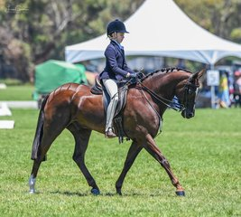 Erin Bowers was all concentration in her rider 9-11 years on Koorana Timeless Monument