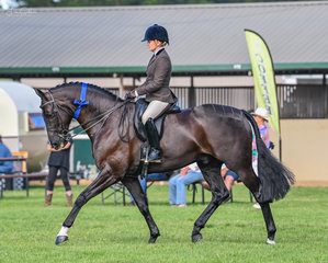 Georgia Greenwell was yet again picture perfect on her Revelwood Steadfast winning the large show hunter hack class in ring 1