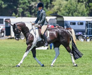 Green horses are never easy but Kelissa O'Shannassy did a terrific job with her lovely Kenlock Le Belle Sky in the ridden hunter hack over 16hh.