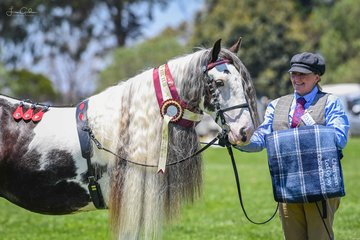 Marindy take a piece of my heart & Lee Scown of Riverdance Gypsy Cobs took out the supreme Cob in ring 6 today and I would also say the best mane and tail if there was one.