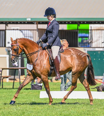 Pictured during their workout to claim the Galloway over 14hh n/e 14.2hh win was Jemma Reeve-Singles on Kolbeach Aristocrat.