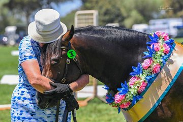 Ruth Feltoe gave her Supreme champion led rare breed new forest pony Habafield Debonair a much deserved hug after their big win today in ring 5