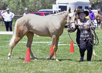 CL Delightful Kisses shown by Jessica Stevens in the Yearling Led Trail