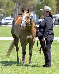 SC She Intimidates Be and Belinda Neilson in the Paint Mare 3 Years and Over Halter Class
