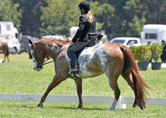 Shameelicius ridden by Anne Marshall in the Amateur Hunter Under Saddle