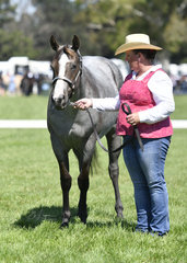 Struttin Shades of Blue shown by Janelle Harper in the Paint Bred Filly 2 Years and Under Halter Class