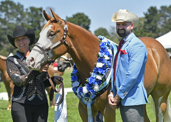 Supreme Halter Exhibit Randallwood Bar Dunit shown by Kathy Randall with Judge Mr Craig Rath. Garland made in support of Dollys Dream