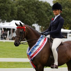 Kerry Dunstan's Malibu Park Tip Top by her imported Riding pony stallion Llanarth Topcat won the Child's Large Pony Championship ridden by Tahlia Young