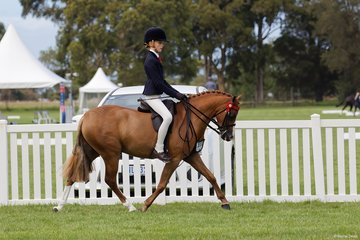 Alicia Cutugro's Boardershow Charlemange  was piloted by the very talented Jessica Sharp to Reserve Champion Child's Small Pony Championship