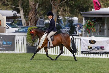 Brayside Miss Divine nominated by Annique  Smith took Third place in the Child's Small Pony Championship