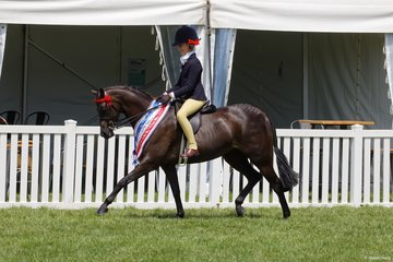 Emma Richardson's very successful nomination Robbanie Chart Topper took out the Child's Medium Pony Championship, ridden by her daughter Annabelle.