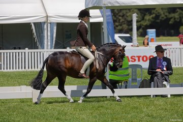 Timothy Eurell's  Dalgangle Piccadily ridden very capably by Poppi Plumbto take third place in the Child's Small Show Hunter Pony