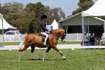 Ebonie Lee's Arcadian Dreamboat was ridden by the ever in demand Jessica Sharp in the Child's Show Hunter Pony