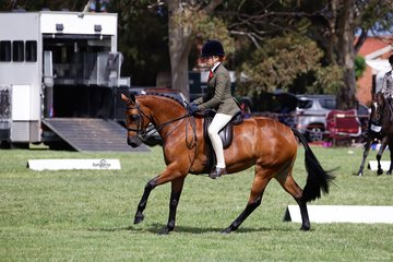 Judith Ivory's Duchess of Da Vito with Sophie Falckh aboard placed third in the Child's Small Show Hunter Galloway