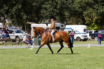 How fabulous to see Emily Murray back enjoying herself in the show ring. Her Regal Manolete took out the Child's Small Show Hunter Galloway