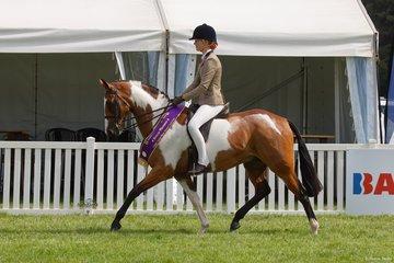 Jamie MacPherson's striking Da Vinci was Reserve Champion in the Child's Large Show Hunter