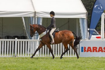Aida Natale's Ruston Park Revelry place third in the Child's Large Show Hunter Galloway
