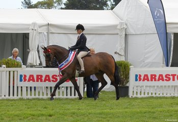 Kurt Crowder's lovely DP Playboy worked very softly to take out the Child's Small Hack Championship ridden by Daizi Plumb