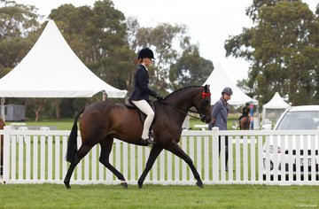 Emily Murray aboard her own Royal Highness took third place in the Child's Small Hack