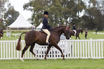 Hannah Cameron's Aloha Brier Rose competing in the Small Child's Hack