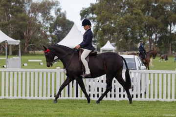 Sally Mitchell's Royalwood Centre Stage with Tex Flack from Jerilderie NSW in the Child's Small Hack. Tex is the son of Former Showie and now publican Jodi Allen