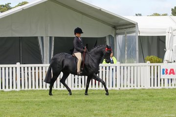 Dianne Banks'  Wideacre Prince George  was ridden by her niece Estelle Gore - Johnson in the Child's Small Galloway
