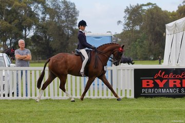 Wynara Illusion nominated and ridden by Mia Heinrich in the Child's Small Galloway