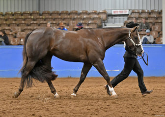 CVS Sure Will, with shown by Holly Wilkie for Lisa McGuire.