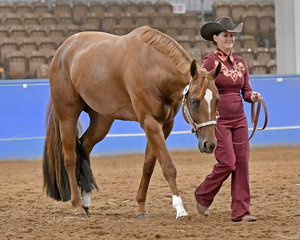 Sheree Myers with LPH Suthern Down Under in Showmanship