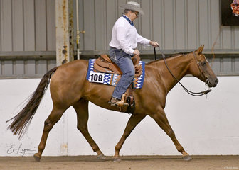 A Hollywood Rose ridden by Kay Couch in Ranch Riding.