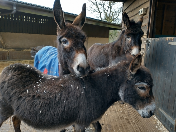 Lily and Faith present day - The Donkey Sanctuary