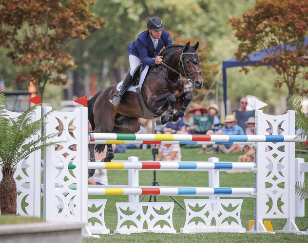 Fontaine Blue VDL<br> Owned by Cavalli Park Performance Horses.<br> As seen in Part 1 & 2 of Stallions 2020. Photo: Cornege Photography