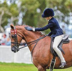 Charli Padey was lucky enough to borrow the ever kind gentleman Dunelm Icon owned by Dianne Macdonald and Tony Bayley for a top 10 placing in the Intermediate Rider class & was also ridden by Di for Reserve Champion Large Hunter Galloway.