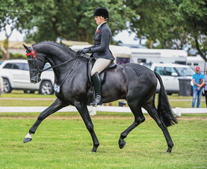 Elizabeth Krog & her super impressive young gelding Warrawee Impresareeo were picture perfect during thier flawless workout in the hotly contested final class of Barastoc for 2021, the Large Open Hack.