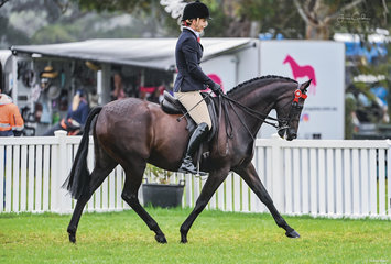 Ever consistent Melissa Molloy competed her two beautiful boys Relmsparc Foxtrot and Merivale Park Royal Doulton for top 10 finishes and top 3 finishes in their owner rider classes.