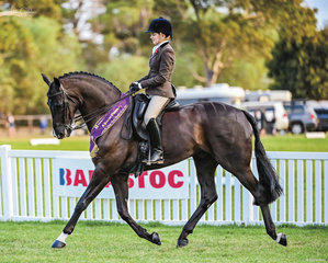 Georgia Greenwell's hard work and beautiful riding on Revelwood Steadfast was rewarded with Reserve Champion in the Large Hunter Hack in the last class for Saturday. There was tears of joy from Georgia who now has her place on the Vic Nationals team.