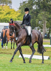 Georgie Kellock rode her glorious young mare Total Fashionista beautifully in the rider 18-25 years & then handed the reins back to Greg Mickan who produced a flawless workout in the Large Hack for third place.