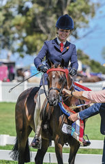 Britt Holmberg & Ascot Anne Marie returned to the showring for the first time in a year and couldn't have asked for more with a Championship win in the Owner Rider Large Pony & top 10 finish in the medium pony class.