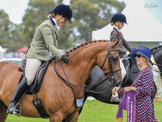The Small Hunter Galloway had great numbers and was a quality line up of horses with the Reserve Championship awarded to a very happy Bec Newman and lovely gelding Beckworth Command N Run.