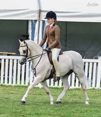 Well known and very succesful Tooravale Welsh Pony Stud owner & breeder Wendy Trimble entered  two classy Newcomer Hunter Ponies for top 10 placings in large classes. Pictured is Tooravale Concerto ridden by Ella O'Doherty at only his second show.