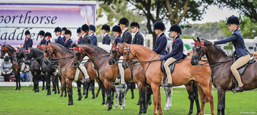 There was no shortage of quality ponies and large entries in the hotly contested Barastoc Large Open Pony Championship line up who are pictured waiting paitently for the results to be announced for 2021.