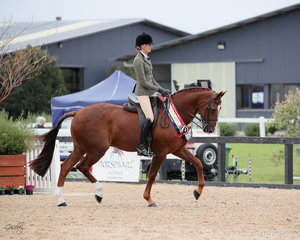 Gladstone MH Golden Champion Led/Ridden API ,Show Hunter and Show Hack
