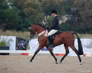 Gold Champion Ridden Purebred Stallion Echos of Tomorrow for S McCurley and R Rogers