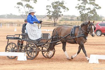Anne Comfort driving 'Crossdwynds Eureka'