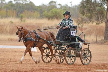 Leonie Hartshorne driving 'Nanardine Monty'