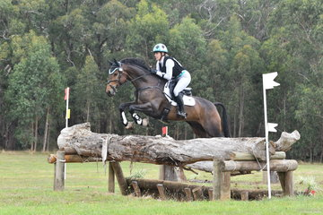 Chelsea Priestley is pictured aboard her, 'Southern Sandro Stern' on their way to second place in Section 5 of the Pryde's CCI**.